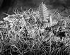 fern moss lichen on log