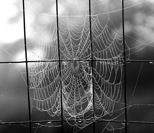 20170415 Web in Fog