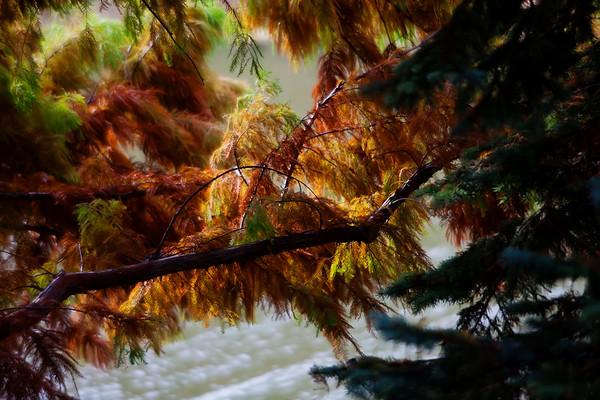 Cypress & Cedar