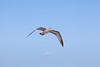 Flying Beach Cam