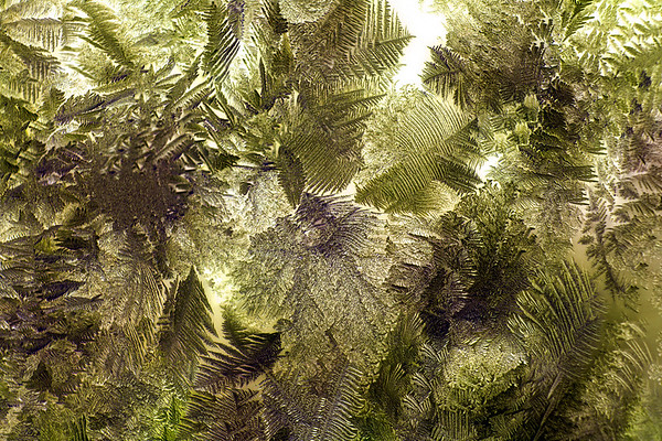 icy jungle
