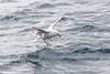 Petrel testing arctic waters