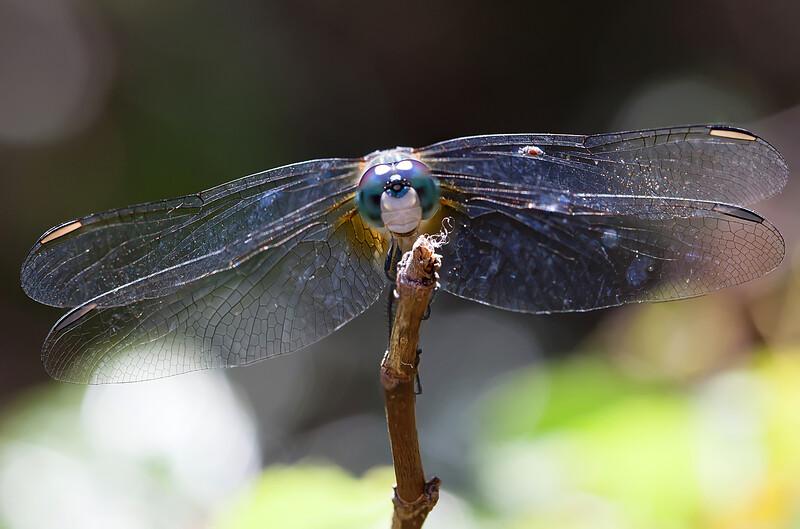 Flying ecosystem