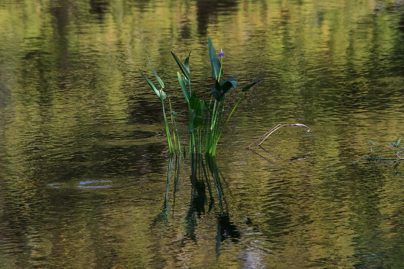 Wetlands Still Life