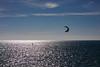 Solitary Sea Skimmer