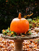 Autumn Tribute