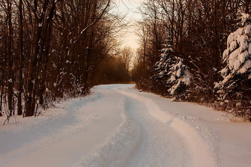 Muted Winter Path