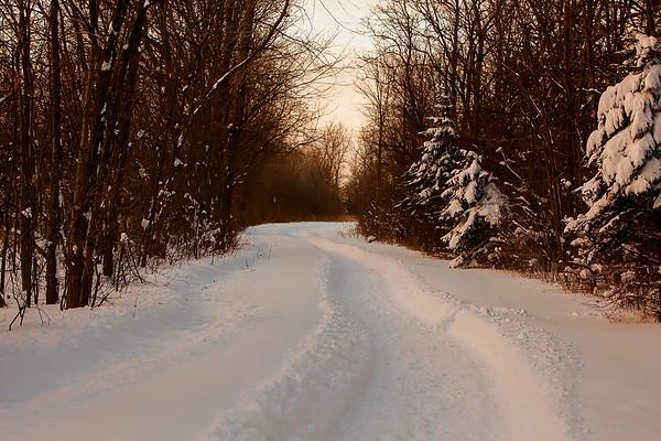 Muted Winter Path