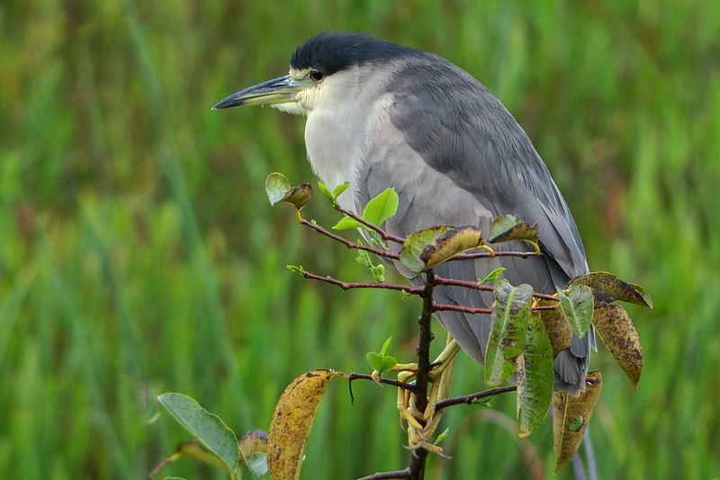 @ the Wakodahatchee Wetlands