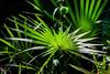 Flora Florida