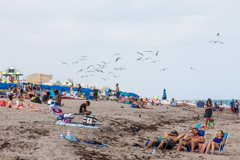 Tourist Season with terns and gulls