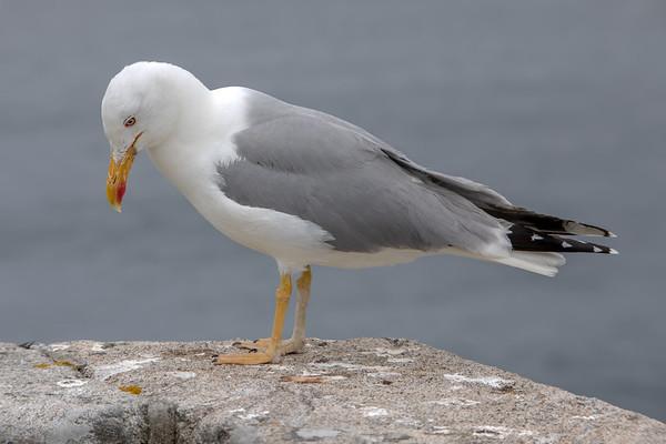 avian detective