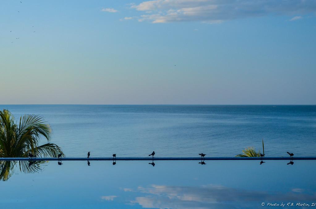 Birds on the Edge of Infinity