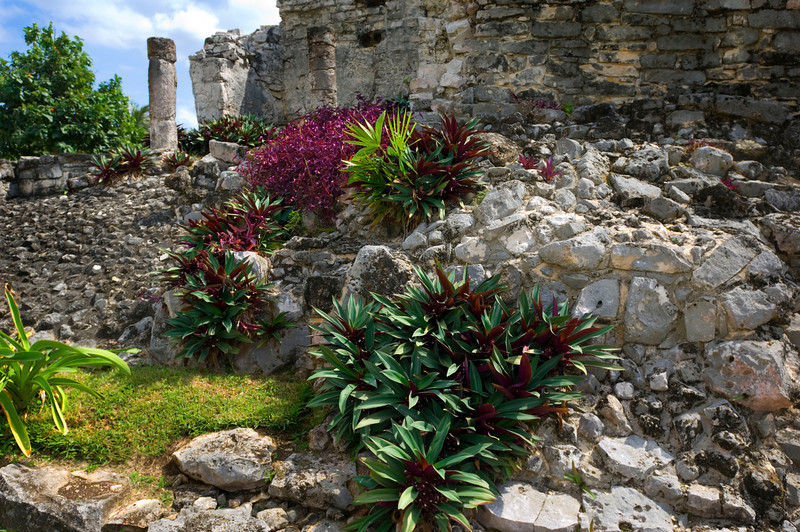 Mayan Ruins, Tulum - Mexico  Tulum is an expansive pre-Columbian Maya site, one of the best-preserved, along the southern coast of the Yucatan Penninsula. Some of the structures there have been dated to 1600 AD. Tradescantia spathacea (the green and purple plant) dominates the foliage that creeps between the rubble of the limestone ruins. The striking plant in the background is Purple Heart.