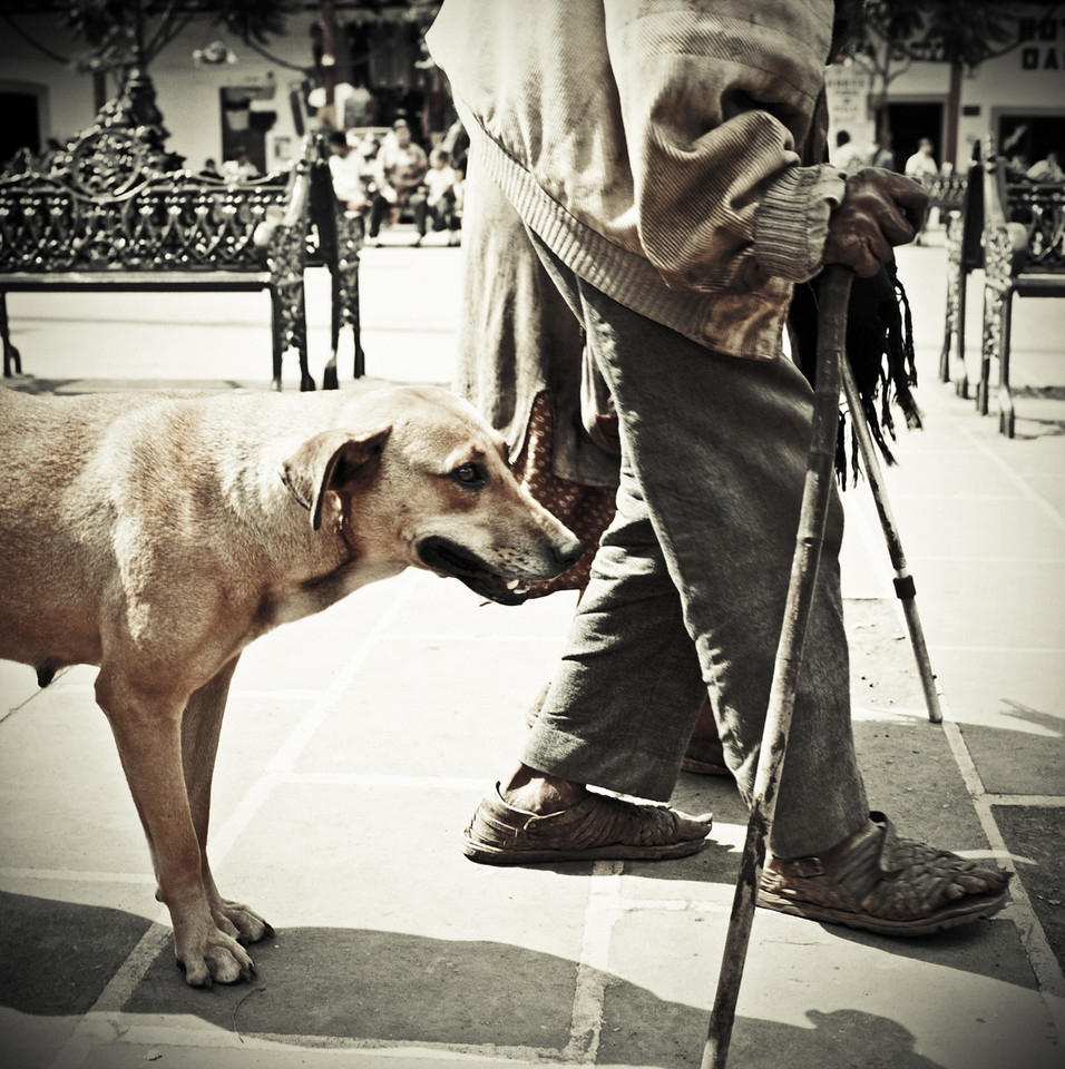 An old couple and their dog walking in a town square in rural Mexico.