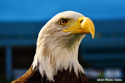 Skyline Eagle 2