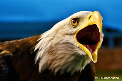 Skyline Eagle 3