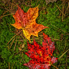 Two_Fallen-Leaves-Oct112016_Lake_Superior_Fall_Color_0112