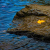 Gold Leaf-Blue Water-MI-Upper_Peninsula-CF_1016_1227