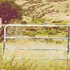 Locked Gate in Sunshine on a Rolling Hillside Rural America