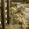 Detail of Wood Post Fence & Weeds Rural America