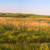 Sun Kissed Blue Stem Grass Prairie