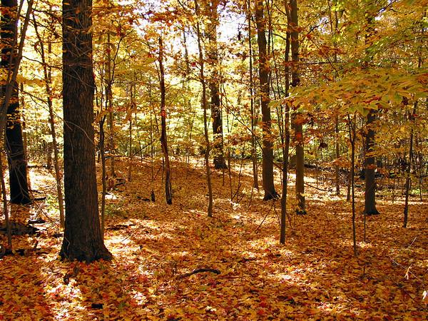Autumn Leaves (taken in Columbus, OH)