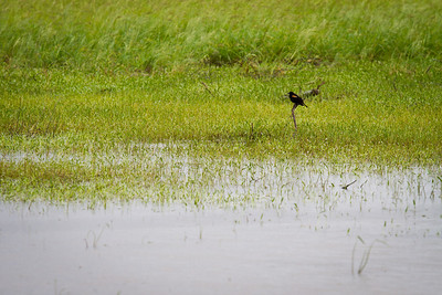 Day 138 - Lone Bird