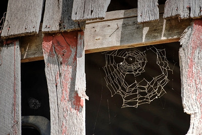 Barn and spider web