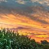 Kansas Corn Field Sunrise