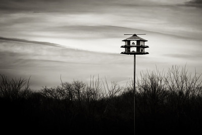 Day 044 - Waiting for Purple Martins
