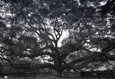 Barrington Oak, Palm Harbor, FL