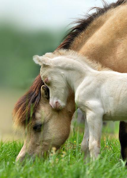 Mare & Foal 5x7