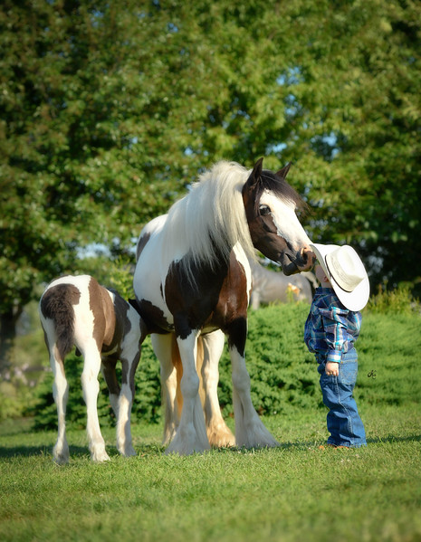 Cruze & horses DHT-85