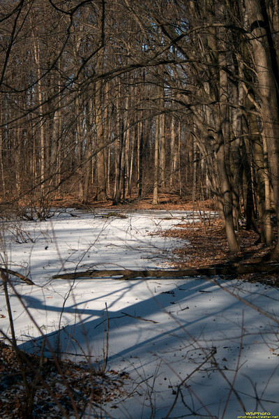 Frozen Wooded Path<br /> Drove by this while out and about with my wife today. Liked the way the sun was hitting the snow and ice so stopped to capture a photo.