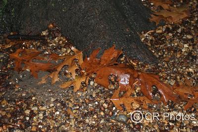 IMG_3373 leaves