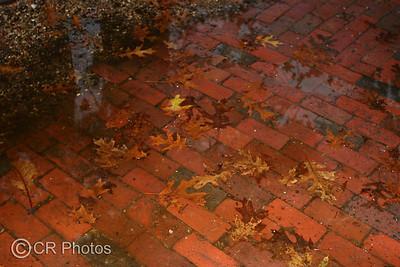 IMG_3372 leaves
