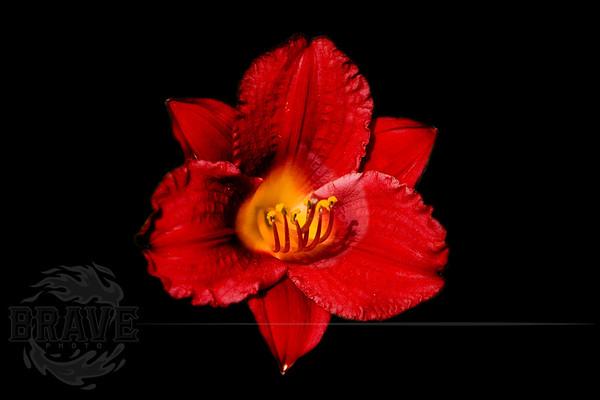 Bloom4