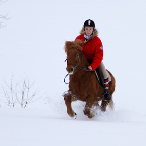 Riding in the snow on an Icelandic horse, a very strong and robust horse race