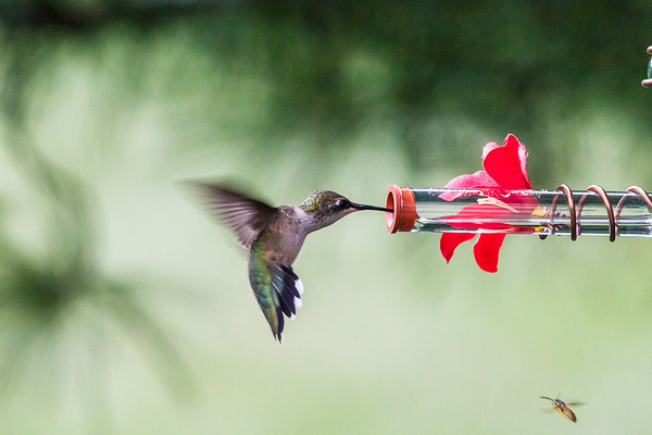 Hummingbird...and Bee