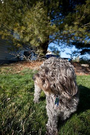 Toby in the backyard.