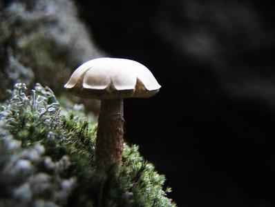 Mushroom on Sphagnum Moss