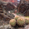 Monument Creek, Grand Canyon - Arizona<br /> <br /> A small cluster of barrel cactus, in pre-bloom, clings to a rocky pillar overlooking the dry drainage of Monument Creek. This creek is one of many that divides the Tonto Plateau, and the 100-mile Tonto Trail, into hikable sections.