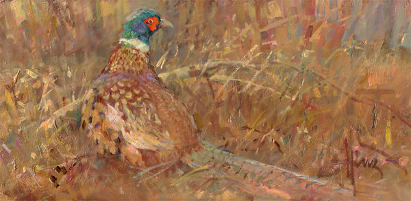 Pheasant Male 7x14<br /> PRIVATE COLLECTION