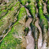 Smugglers Cove - Oregon<br /> <br /> Low tide at Smugglers Cove. Hundreds of years of hydraulic action have carved away root-like sculptures in the tide-pool stone, and tightly bound plants thrive in the violent waves.