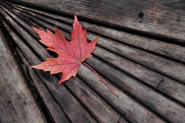 Fall on the Boardwalk