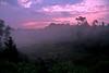 Jungle Mist