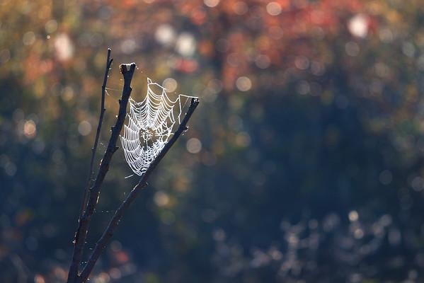 Autumnal Web
