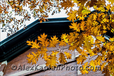 Leaves at Drew University - 36 Madison Ave, Madison, NJ 07940 By Alex Kaplan, AlexKaplanPhoto.com