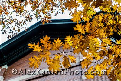 Leaves at Drew University - 36 Madison Ave, Madison, NJ 07940 By Alex Kaplan, AlexKaplanPhoto.com